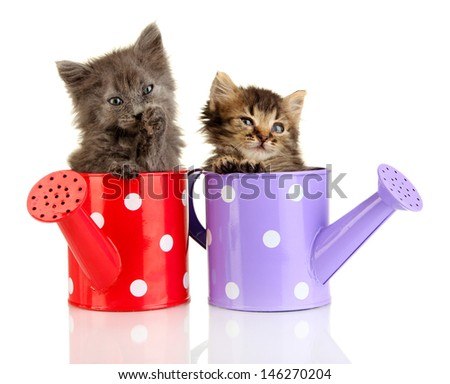 Small kittens sitting in watering can isolated on white - stock photo