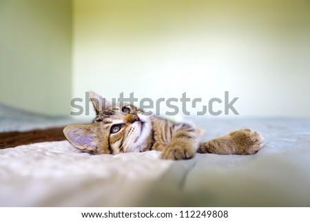Small Kitty - stock photo