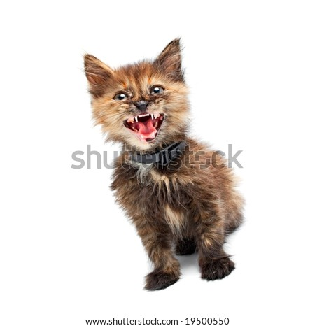 small kitty isolated on white background