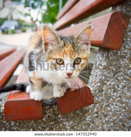 Small Kitty on the bench