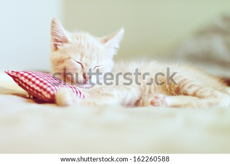 Small Kitty With Red Pillow  - stock photo