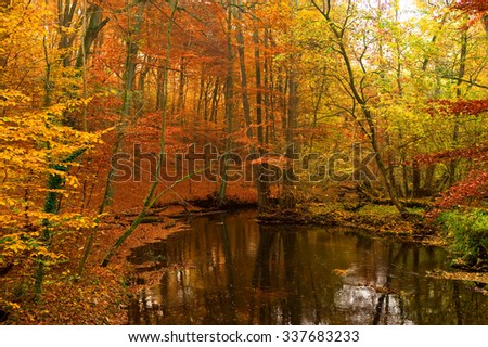 Small lake in the autumn forest in Sachsenwald north Germany