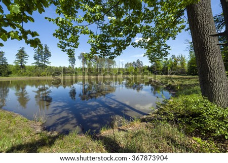 Small lake in the forest during summer day, Southern Poland - stock photo