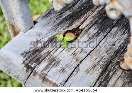 Small leaves sprout on the wooden bench