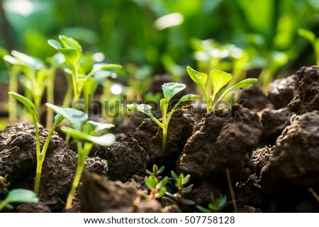 Small little plant on pile of soil with sun beam in morning