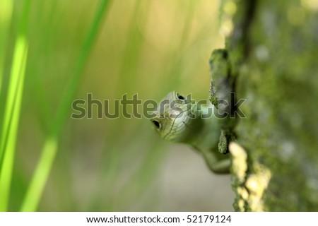 Small lizard behind a tree - stock photo