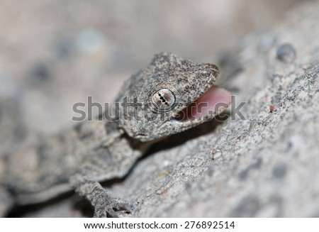 small lizard on the wall - stock photo