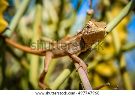 Small lizard sitting on a cactus, rural Rajasthan, India