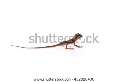 Small lizards isolated on white background .