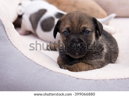Small Mixed Breed Puppies Sleeping Outside on Summer Day - stock photo