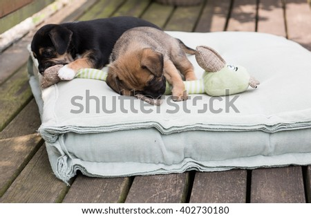 Small Mixed Breed PuppiesPlaying with Toys Outside on Summer Day - stock photo