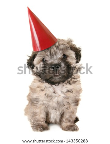 small mixed breed puppy sitting down with a birthday hat on - stock photo