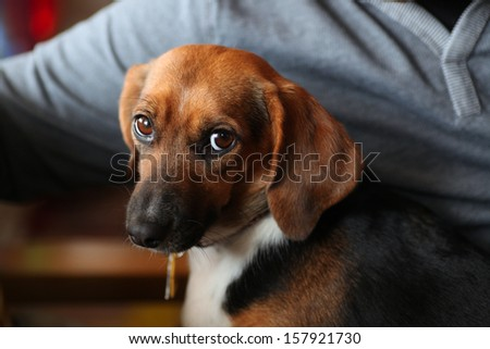 Small mixed breed rescue dog staring balefully at camera with man's arm & torso in the background lit by natural light