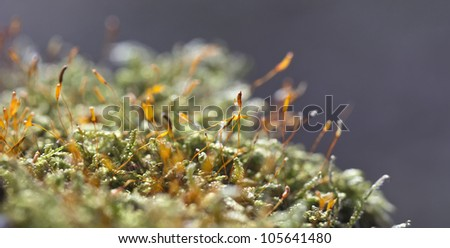 Small moss details in a sunny morning - stock photo