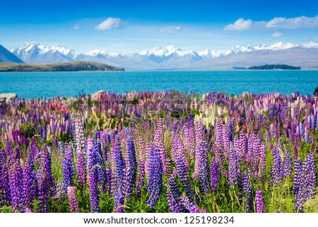 Small mountain lake with blooming flowers on foreground - stock photo