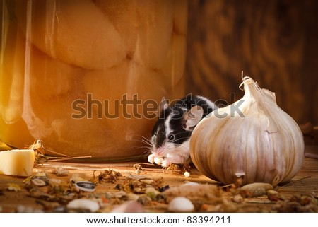 Small mouse eating something in basement - stock photo