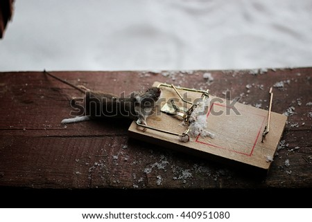 small mouse in a mousetrap