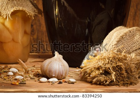 Small mouse in basement with garlik and burlak - stock photo