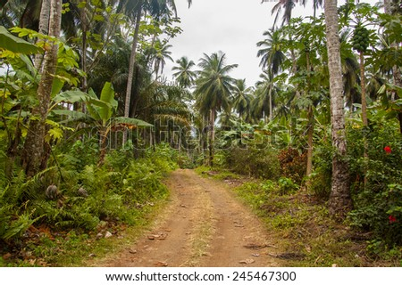 Small muddy road going through a dense tropical forest with palm trees in Africa. - stock photo