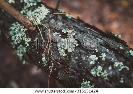 Small mushrooms in the moss at the autumn day - stock photo