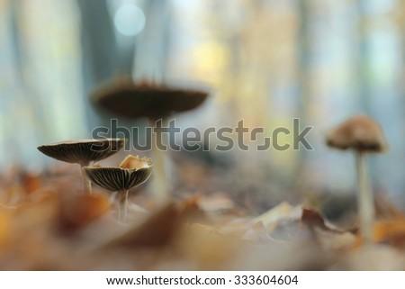 small mushrooms toadstools  - stock photo