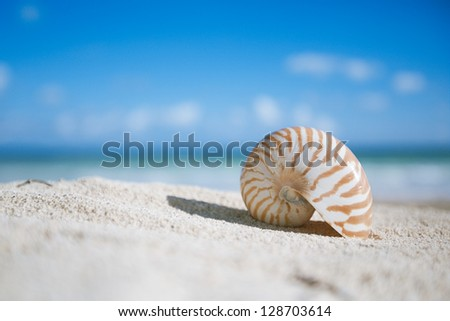 small nautilus shell  with ocean , beach and seascape, shallow dof - stock photo