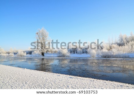small oak on coast river - stock photo