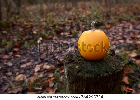 Small orange gourd on a weathered wooden post in fall woodland. Leaf-covered trail in background, with copy space.