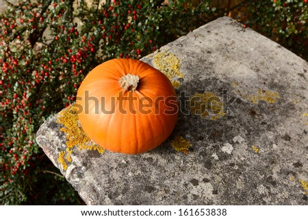 Small orange pumpkin on a stone bench with background of red cotoneaster berries - stock photo