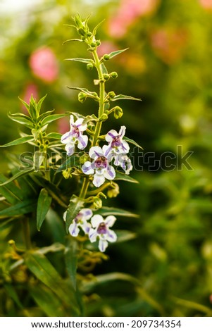 Small orchid flower with a Shallow DOF - stock photo