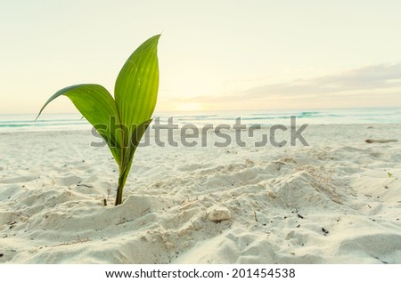 small palm tree on beach - stock photo