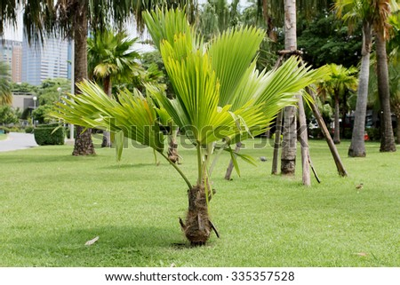 Small palm trees also need well-maintained. - stock photo