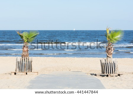 Small palms at the beach