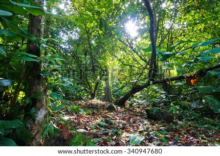 Small path crossing the jungle with lush foliage, natural light, Costa Rica , Central America - stock photo