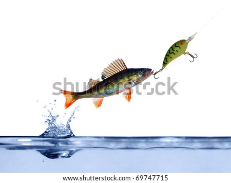small perch on hook above blue water - stock photo