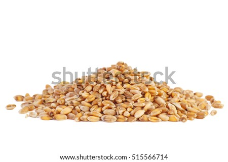 Small pile of barley grains isolated on white background