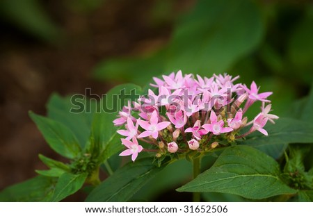 small pink bloom - stock photo