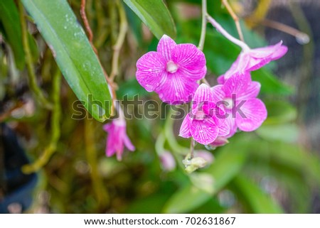 small pink orchid