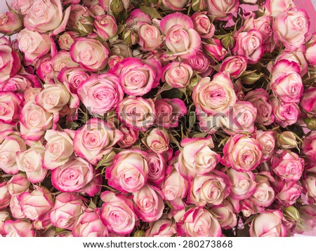 Small pink roses bouquet close up. - stock photo