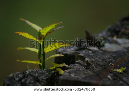 small plant