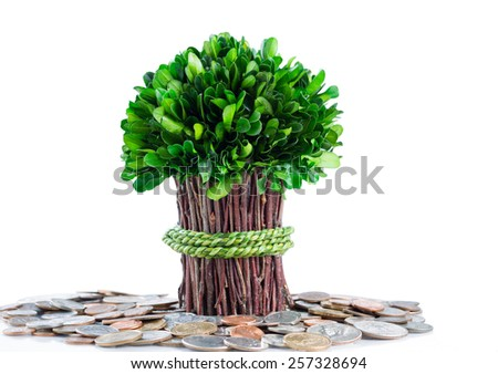 Small plant and branches coming out of pile of coins on glass table with isolated white background and reflection. Money tree concept.  - stock photo