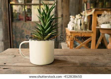 Small plant cactus and desert flora in cup flower pot on wooden table and garden background in warm tone/Small plant in flower pot in warm tone - stock photo