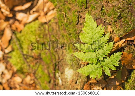 Small plant fern grows on a tree stump. On the right side of picture. - stock photo