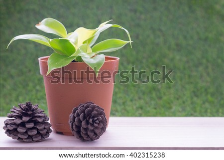 Small plant in brown flower pot on wooden table and grass wall background and dry pine tree fruit/Small plant in flower pot and dry pine tree fruit - stock photo