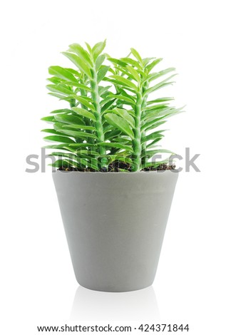 Small plant in ceramic pot on isolated background