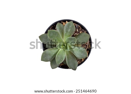 small plant in pot . isolate . on white background - stock photo