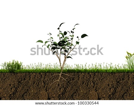 small plant in soil section