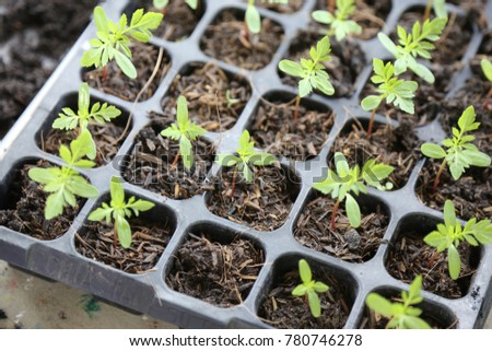 small plant in the seeding tray
