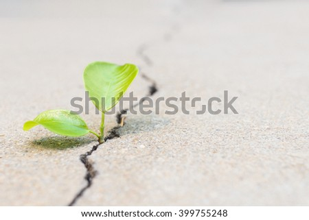 small plant is growing between crack concrete present to hope, start or life - stock photo