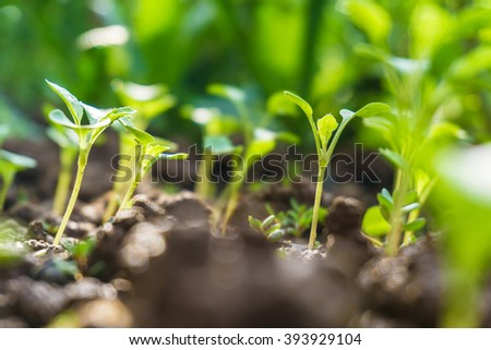 Small plant is growing with soil close up - stock photo